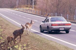 動物と車の事故注意