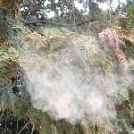 花粉症対策・ポレノン 実力や効果や使い方は?本当に安全?