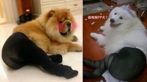 パンスト犬